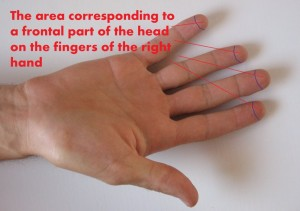 the-area-corresponding-to-a-frontal-part-of-the-head-on-the-fingers-of-the-right-hand